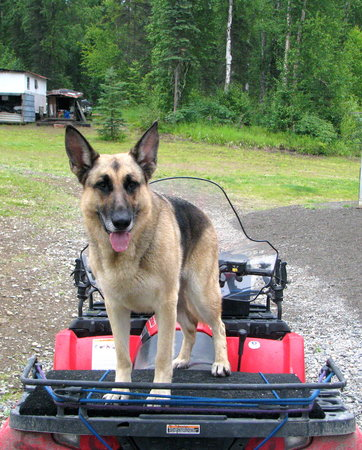 Alaska Wilderness Adventure: Chena the Dog welcomes you!