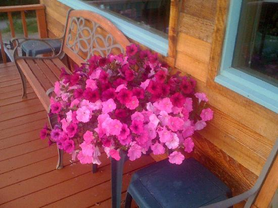 Denali Overlook Inn: Even their flowers were stunning=)