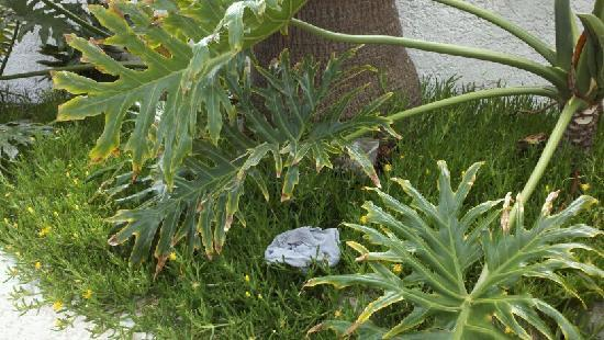 Las Rocas Resort & Spa: Underwear are still there even after 3 days of telling hotel staff.