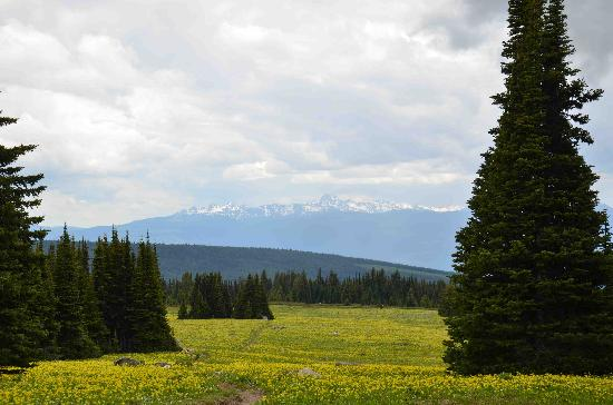 Wells Gray Provincial Park: trophy mountain meadow