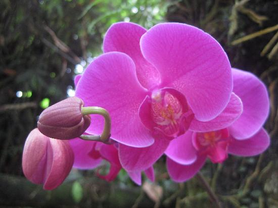 gorgeous flowers picture of sandakan rainforest discovery centre