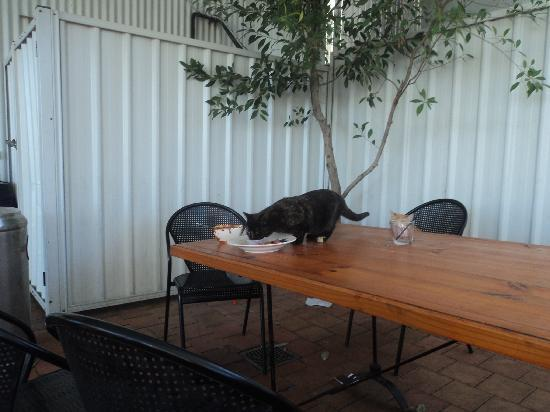 Bluetongue Cafe: feral cats
