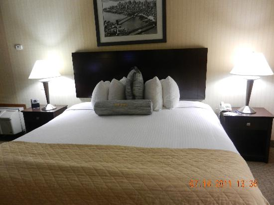 "Wyndham Garden Newark Airport : Nice looking bed from far, but ""hairy"" when you look closely"