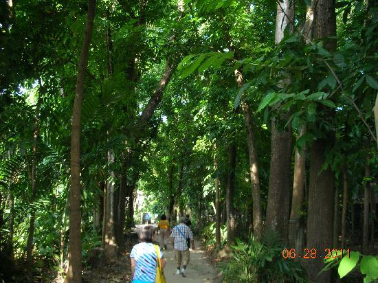 Center for Tropical Studies (CENTROP): walking into Centrop amidst tall trees