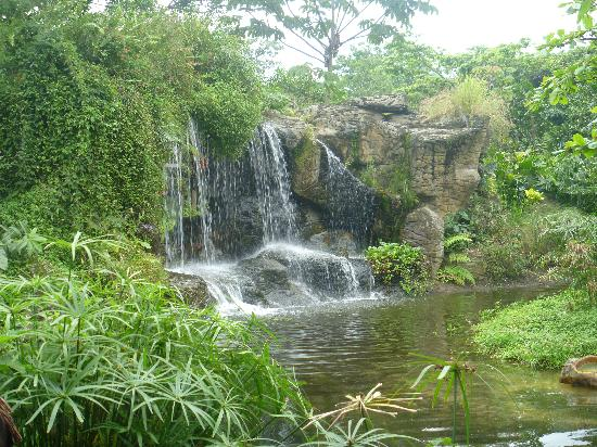 Zoologico de Cali: The decoration is natural and beautiful