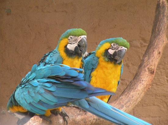 Zoologico de Cali: These guys were posing ( not kidding.)