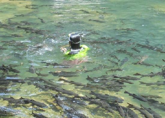 Chanthaburi, Thailand: Swimming with the fish