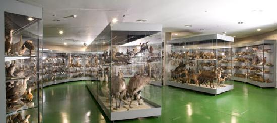 Museo Nacional de Ciencias Naturales: Almacén visitable