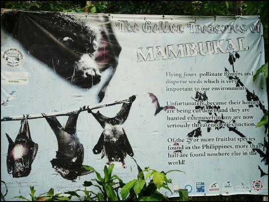 Mambukal Hot Spring Resort: bats!