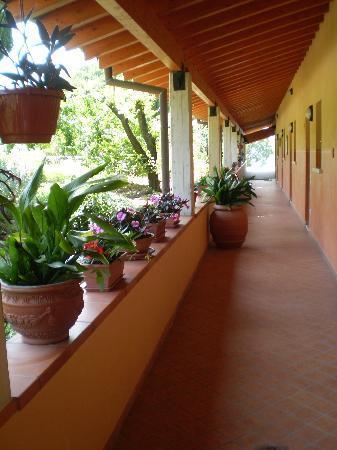 Agriturismo Renzano : Garden