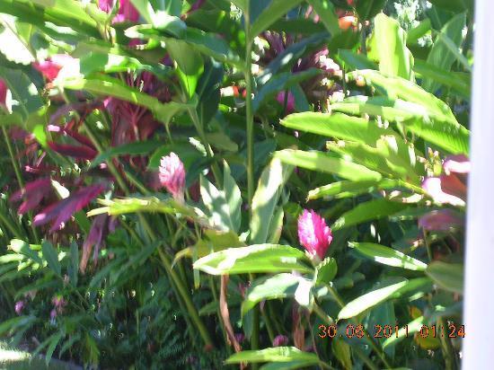 Maui Schooner Resort: Foliage