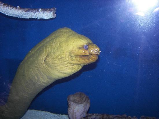 Ell At The Aquarium Picture Of South Carolina Aquarium