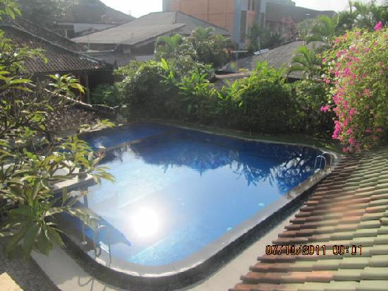 Fat Yogi Cottages: pool view from the top
