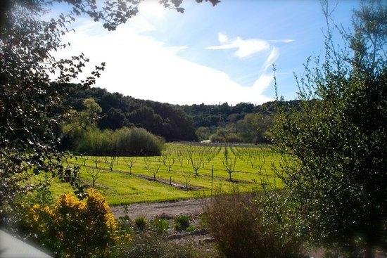 Vino V Wines