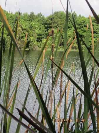Six Mile Cypress Slough Preserve: view of Gator Lake