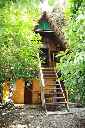 The Howler Monkey Hotel: Our House
