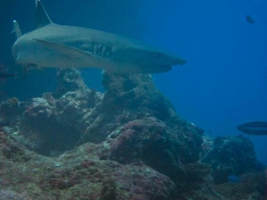 Ono Island, Φίτζι: Curious creature