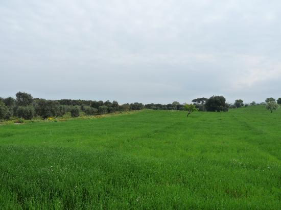 Agriturismo Masseria San Benedetto: walking on the farm next door