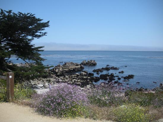 هوليداي إن إكسبريس هوتل آند سويتس مارينا - ستيت بيتش إريا: Monterey