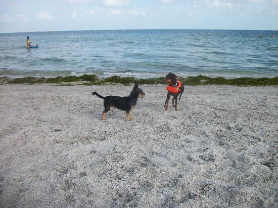 Fort De Soto Park: Making friends
