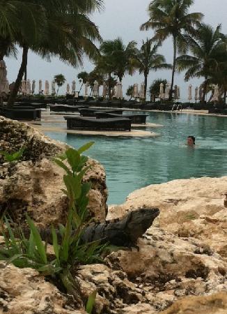 ซีเคร็ทส์โมราม่าบีช รีเวียร่า แคนกุน: Gorgeous pool area