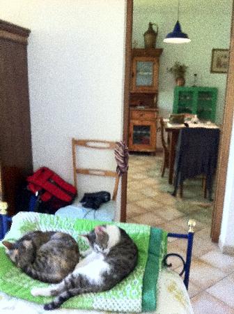 Agriturismo La Volpe e l'Uva : visiting cats