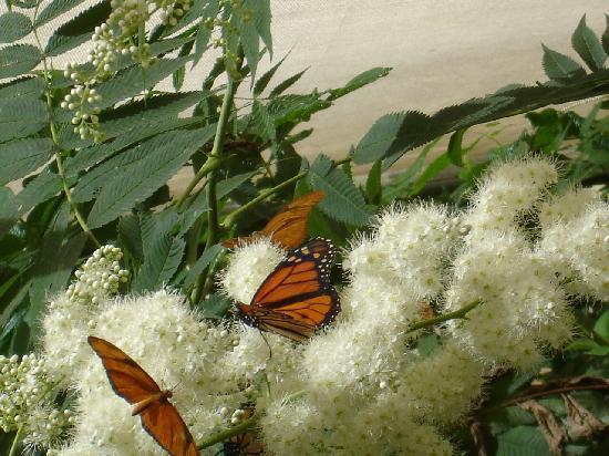 Franklin Park Zoo : Butterfly exhibit