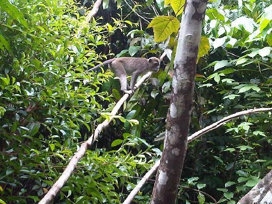 The Secret Sanctuary Boutique Cottage: monkey forest