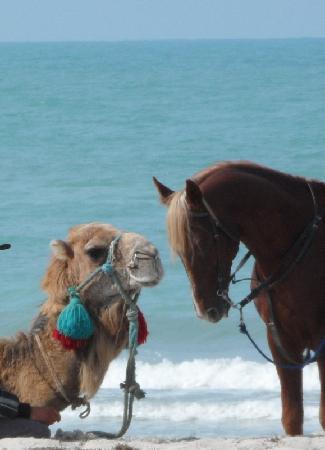 Radisson Blu Ulysse Resort & Thalasso Djerba: Ils vous attendent... même eux.