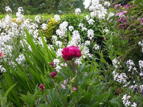 Heath Cottage Farm B&B: Beautiful flowers in the garden