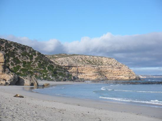 Wanderers Rest of Kangaroo Island: Seal Bay