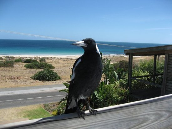 Carrickalinga Australia  city images : ... fishing Picture of Carrickalinga Beach, Carrickalinga TripAdvisor