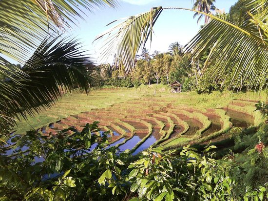 The Bali Driver & Tour Guide: Pupuan rice terraces