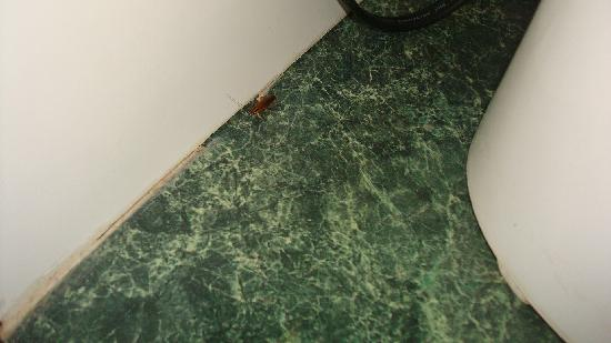 Club Land'or Resort: BUGS! Roaches and Centipeds and silverfish in sinks, bathroom and floor