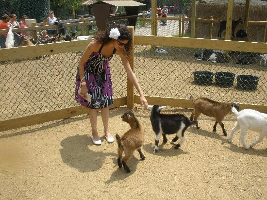 York's Wild Kingdom Zoo and Fun Park: feeding the goats