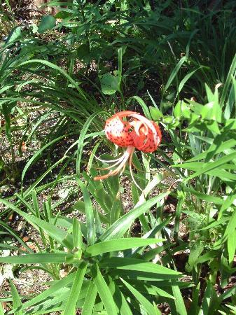 Roanoke Island Inn: jellyfish flower