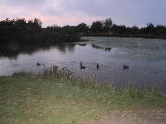 Warcombe Farm Camping Park: the lake at sunset