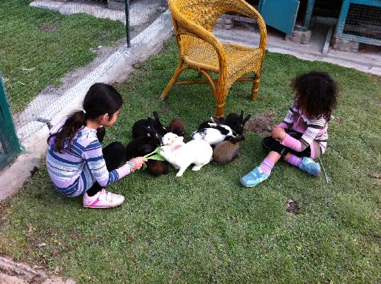 Horas Family Home: Rabbit sitting .. all day!