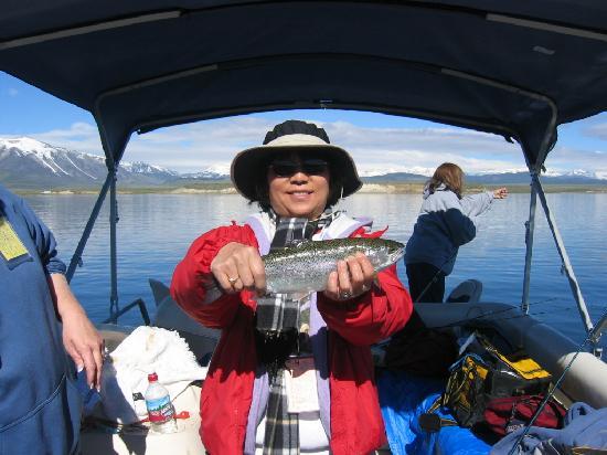 Crowley Lake: More Big Trout