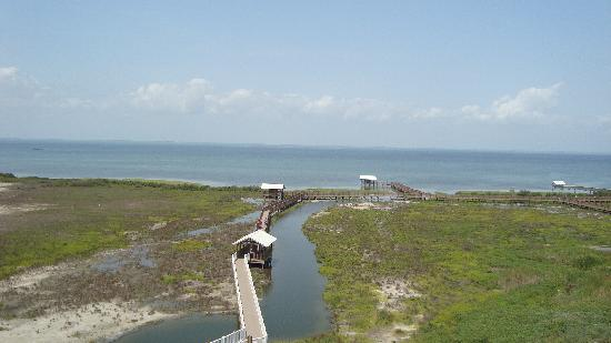 South Padre Island Birding and Nature Center: View of the boardwalk path
