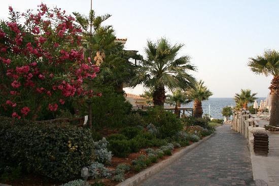 Grecotel Club Marine Palace : Территория