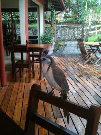 Hotel Arco Iris: Our breakfast companion