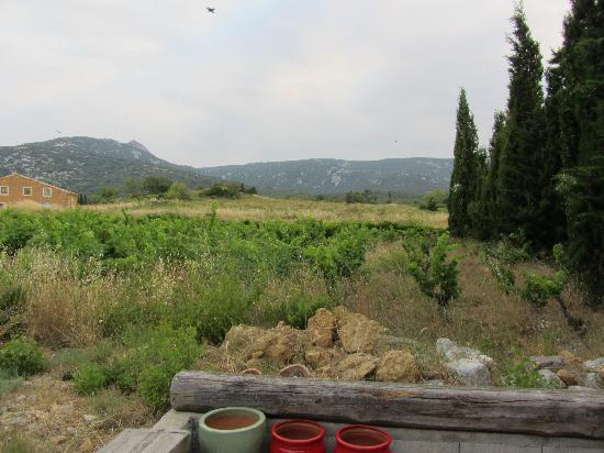 La Rassada Eco B&B : View from the deck over the vines to the mountains