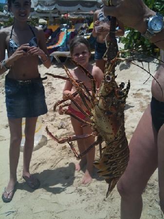 St Martin Catamarans Charters : Lobster