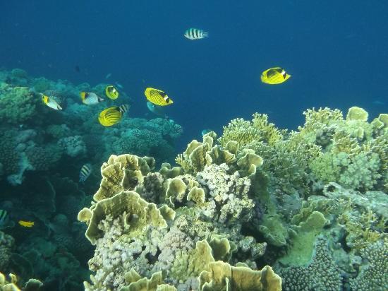 Sea Gardens: barriere de corail de l'hotel