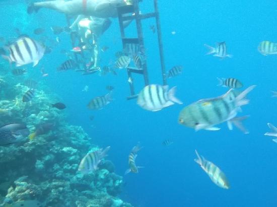Sea Gardens張圖片