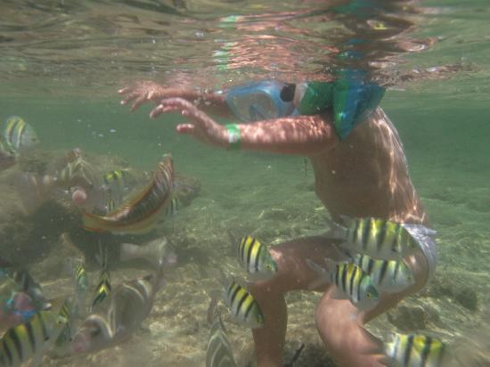 Sea Gardens: A quelques metres du bord les enfants peuvent voir pleins de poissons