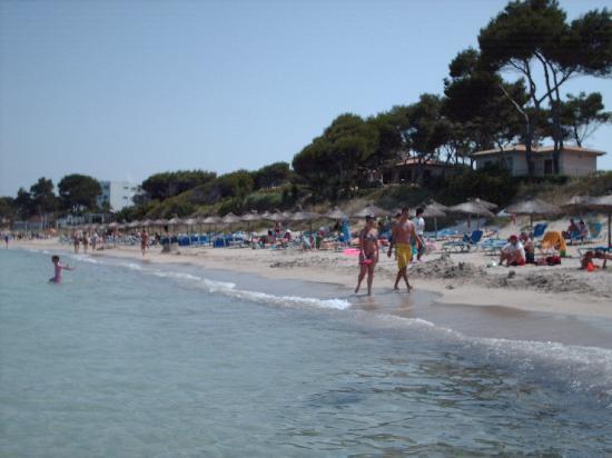 Iberostar Alcudia Park: lifes a beach