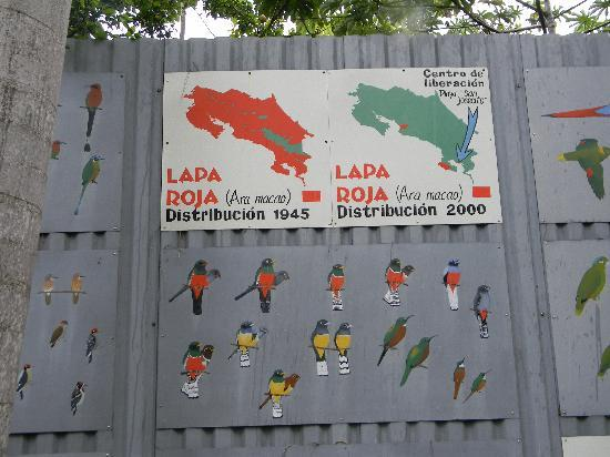Zoo Ave: Part of the mural of Costa Rican birds