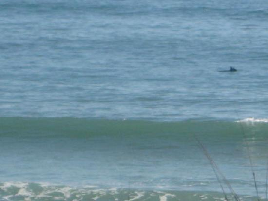 Topaz Hotel / Motel: dolphins caught swimming right outside of the hotel window!